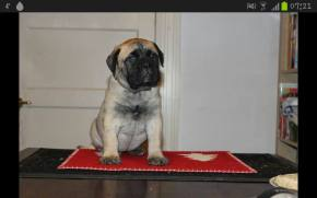 2013-11-25 Puppy Mette