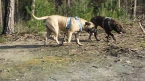 2016-02-11 Mette en Ona aan de wandel
