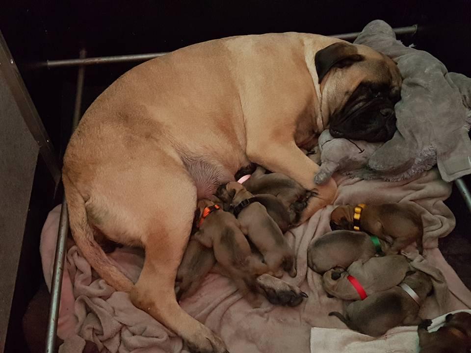 2016-05-10 De pups zijn geboren