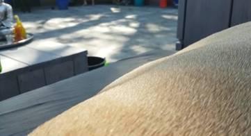 Bewegende pups 8 weken
